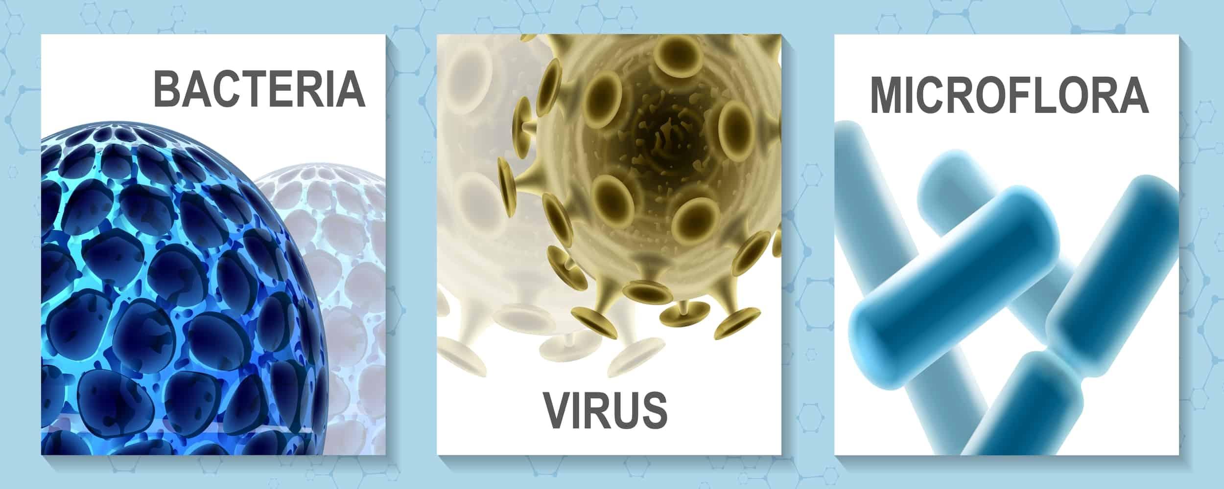 kills bacteria and fungi