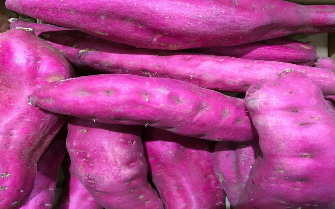 Why Purple Not Pink: Killer Facts About Purple Sweet Potatoes